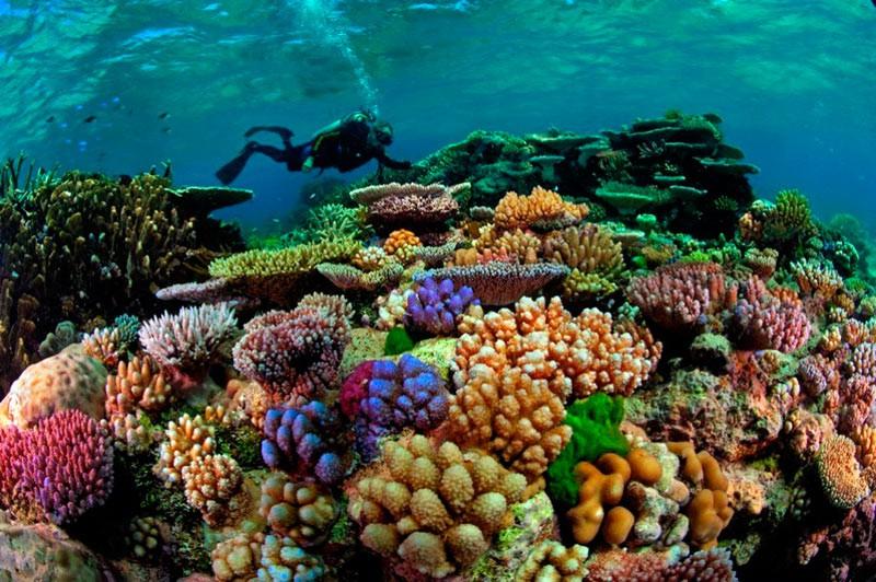 Корали в північній частині Великого Бар'єрного рифа