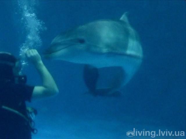 Дайвинг с дельфинами в дельфинарии