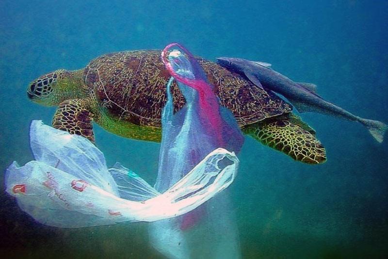 Черепаха, що заплуталася в смітті «плямі».