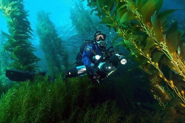 Дайвер між водоростями