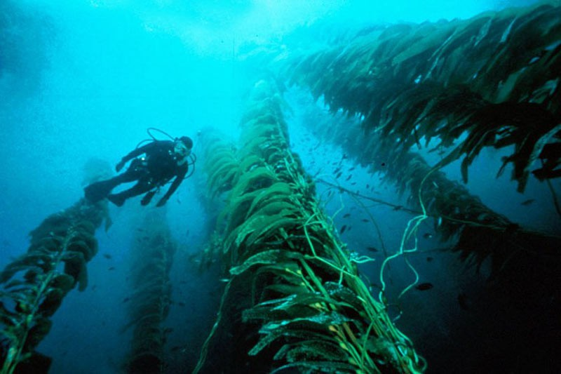 Дайвінг між водоростями