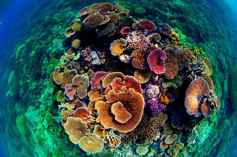 Кам'янисті корали Великого Бар'єрного рифу