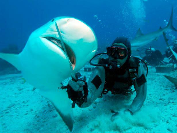 Дайвер годує акулу