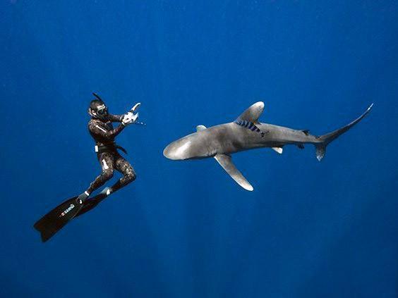 Фрідайвінг з акулами