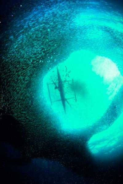 Сатая сардин під лодкою