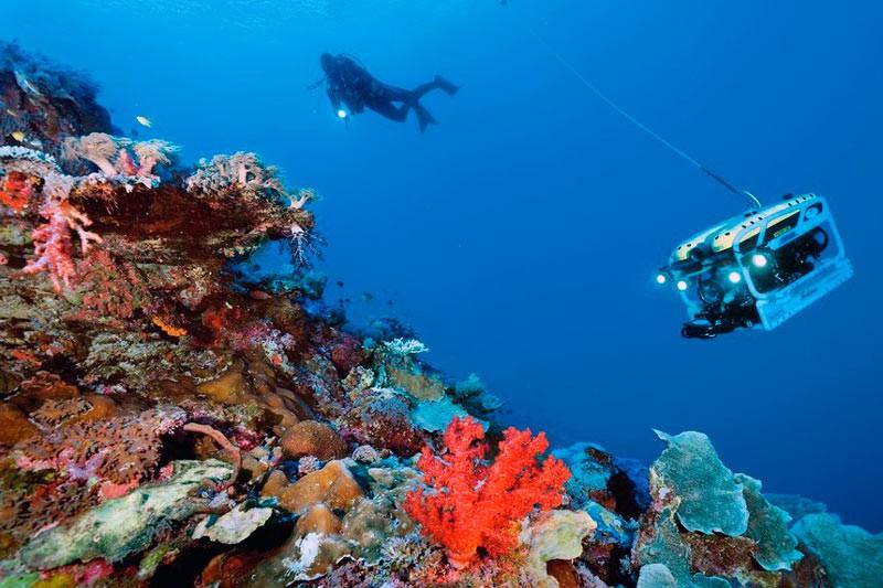 Дайвер вивчає покритий коралами підводний схил