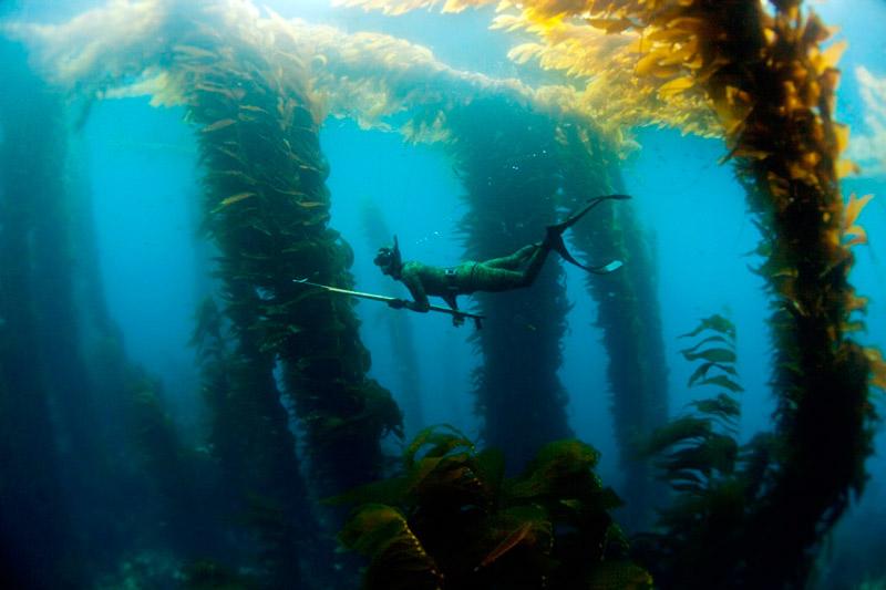 Підводне полювання
