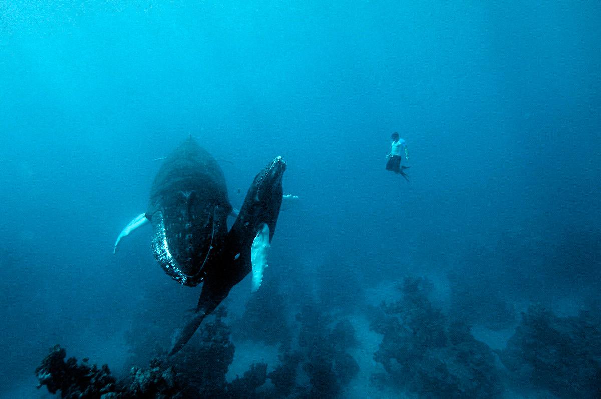 Фрідайвінг з китами