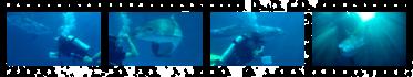 Дайвінг з дельфінами. Кобзов аква-шоу